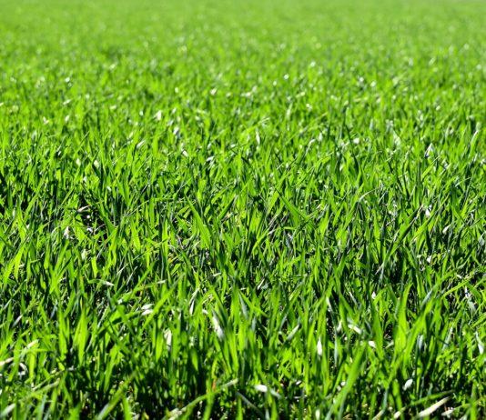 Jak położyć i pielęgnować sztuczną trawę?