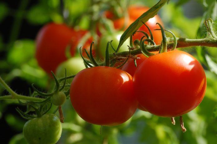 Zakładamy domowy ogródek hydroponiczny
