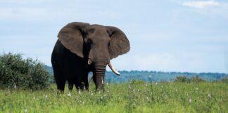 Wyprawa na Safari